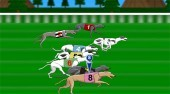Greyhound Racer